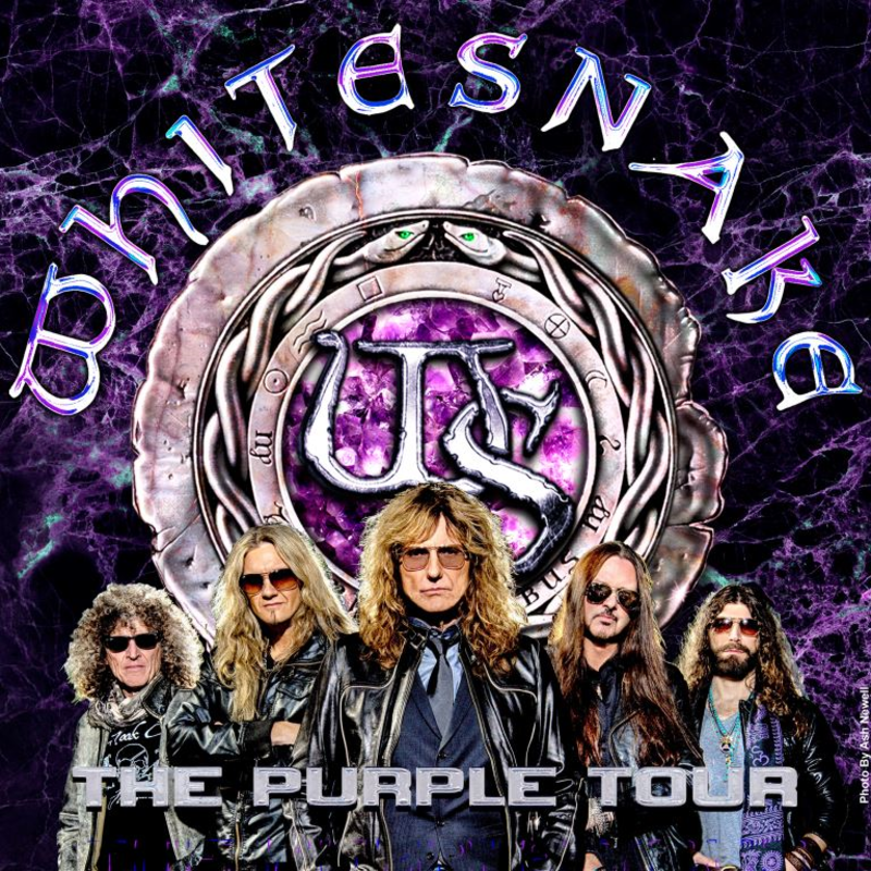 whitesnake-purple album